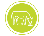 _MILK FROM GRASS-FED COWS_Icon